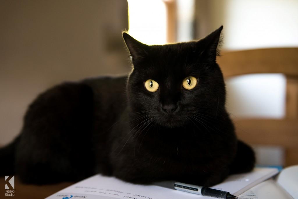 Black Cat Lil