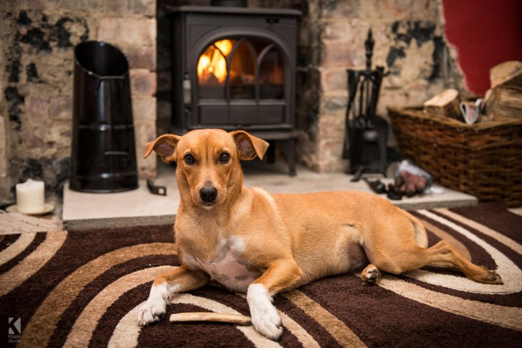 Whippet Dog near the fire