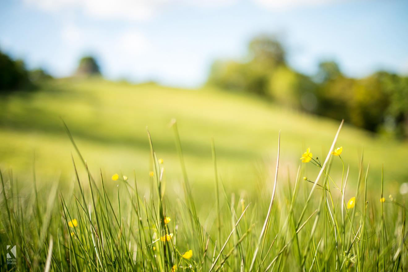 field spring