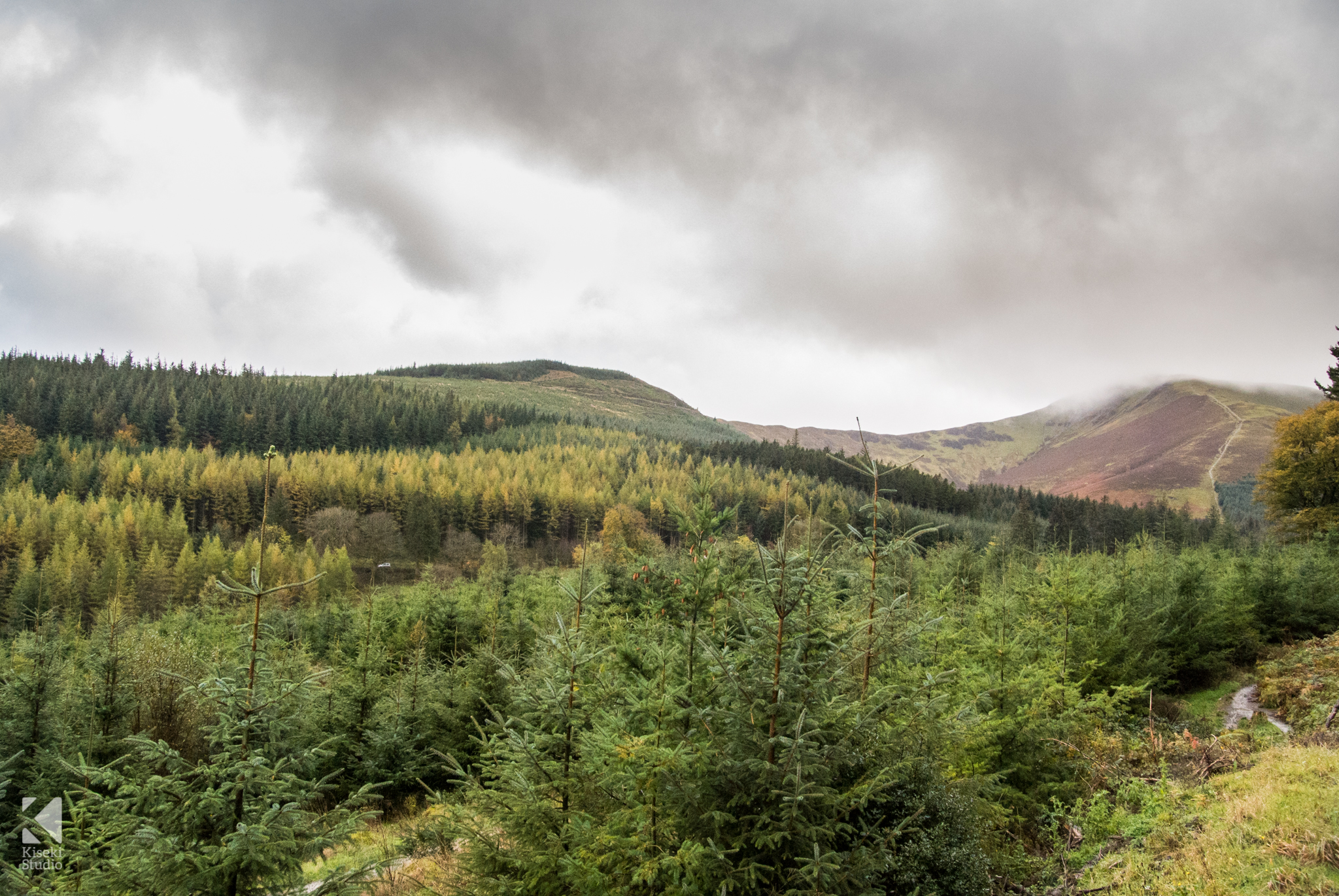 Whinlatter Forest cloudy day