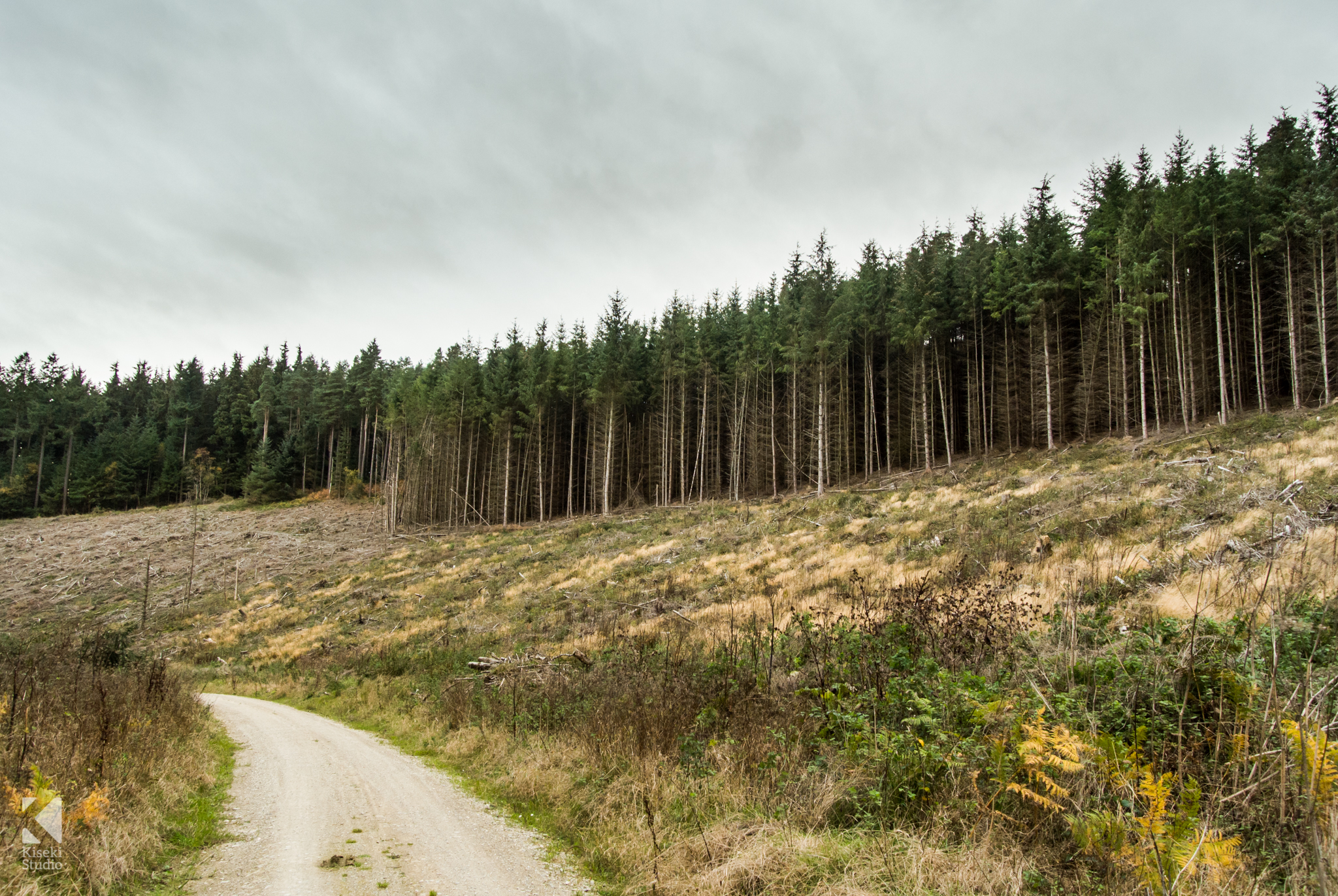 Dalby Forest trees