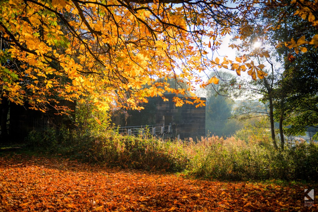 Autumn around Kirkstall, Leeds