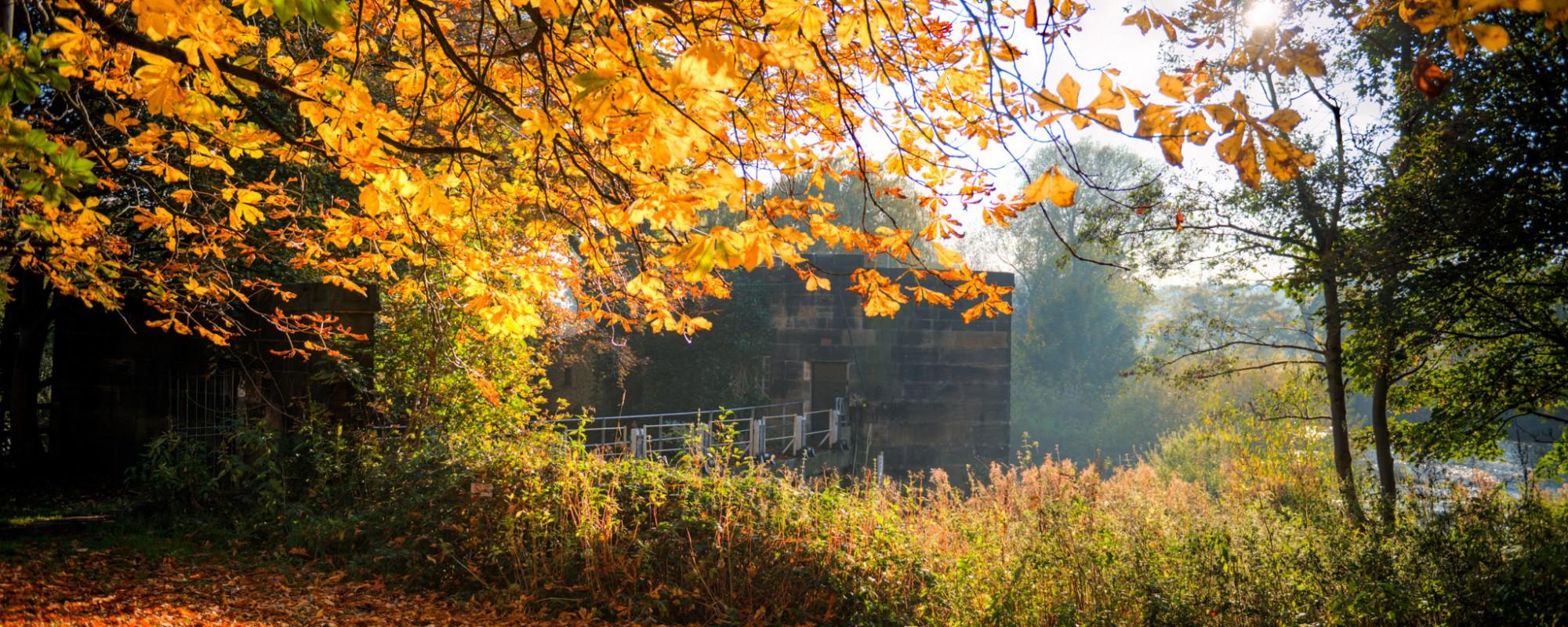 Kirkstall autumnal scene with golden orange leaves