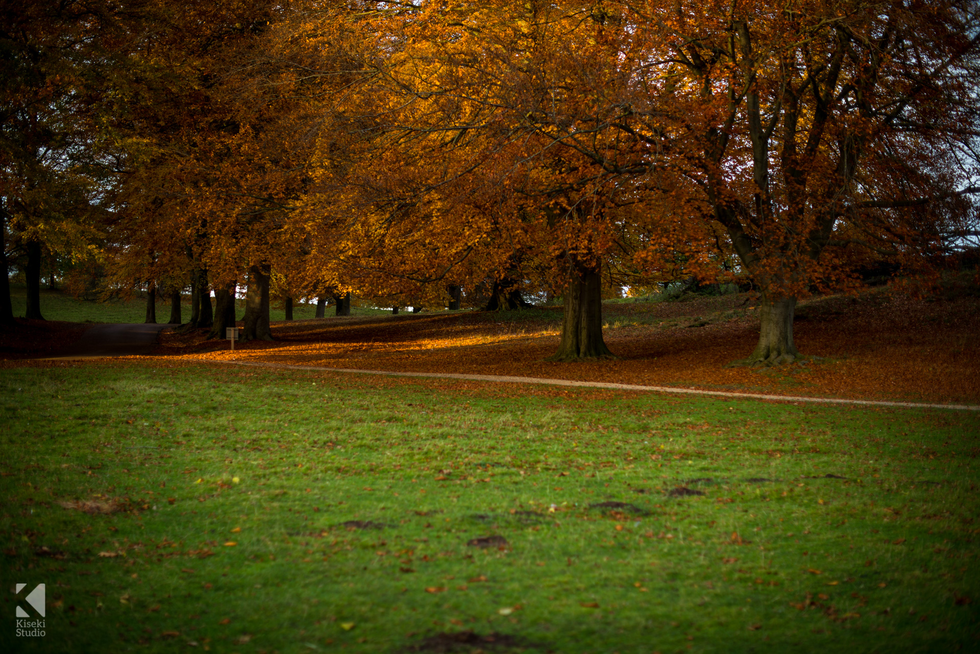 studley-royal-park-leaves-autumnal-orange-moody-trees-shadows-clear-calm-autumn